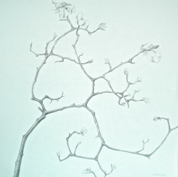 Salut Printemps! Plant drawings to celebrate the sap running, new snow notwithstanding.