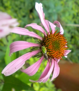 Green pollinator